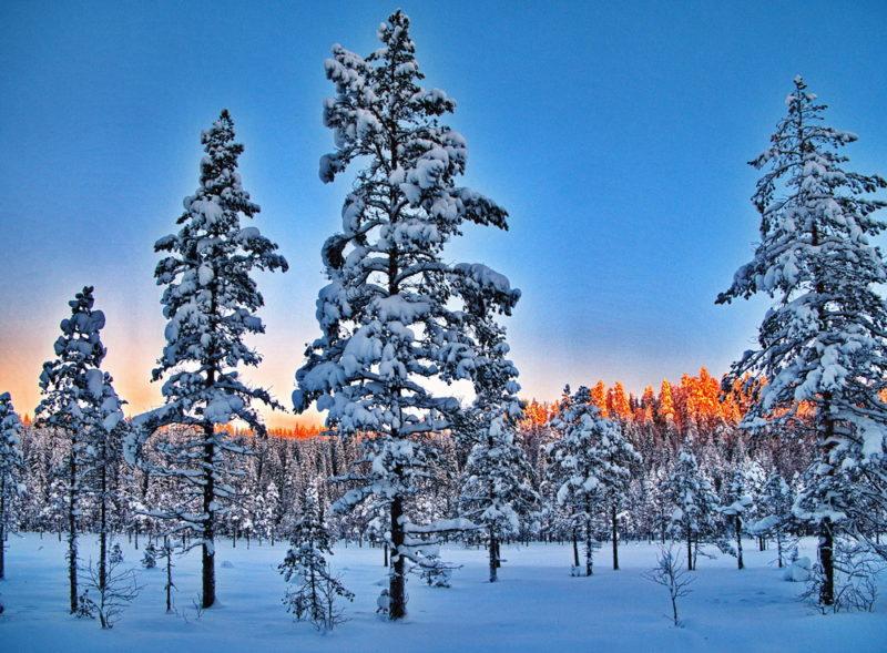 Soluppgång över snöig myr!